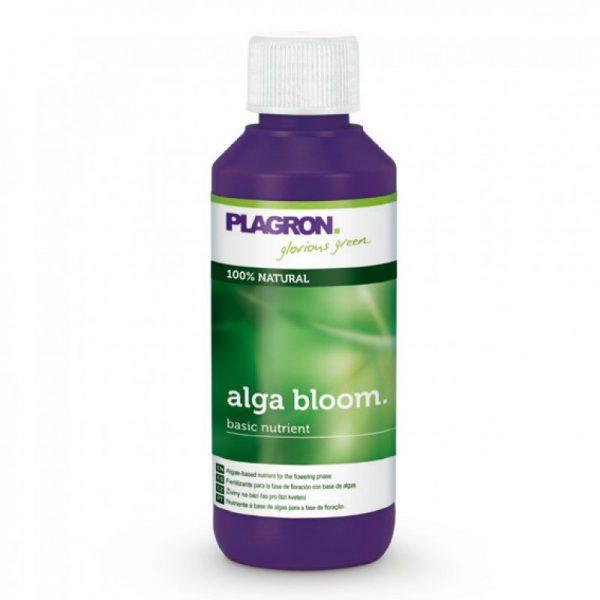 alga_bloom