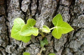 biologische plantenvoeding