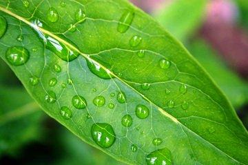 organische plantenvoeding
