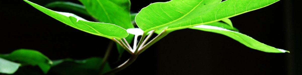 plantvoeding slider 1