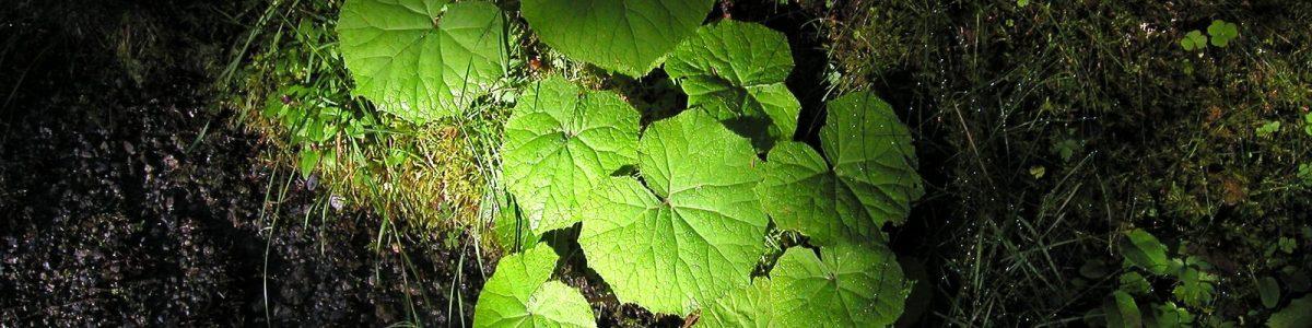 plantvoeding slider 2