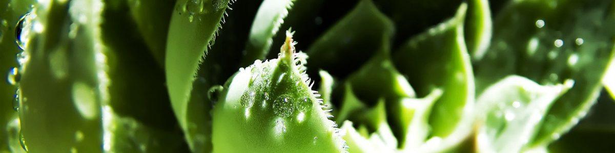 plantvoeding slider 3